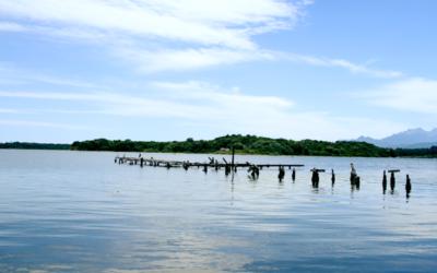 Journée de nettoyage de l'étang d'Urbinu